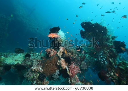 USAT Liberty shipwreck - stock photo