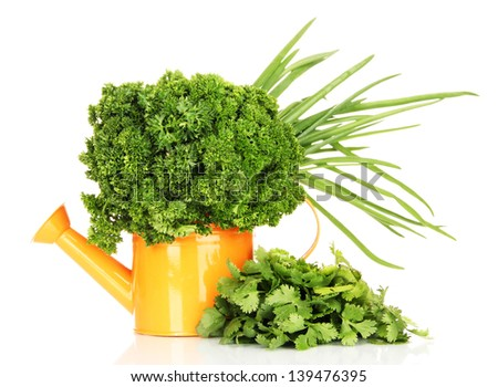 Useful herbs in orange watering can isolated on white - stock photo
