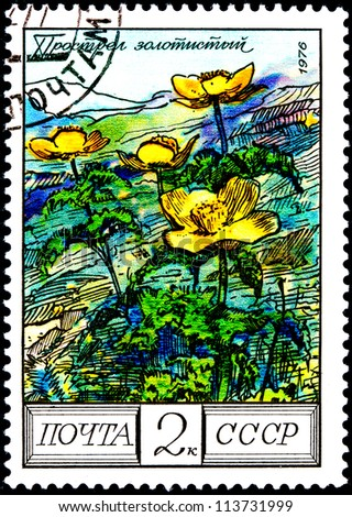 "USSR - CIRCA 1976: A Postage Stamp Shows Image of a Golden Pasque Flower with the Designation ""Pulsatilla Aurea"", circa 1976"