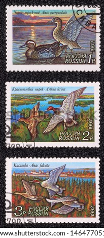 USSR - CIRCA 1992: A set of postage stamp printed in the USSR, shows Duck Conservation, circa 1992