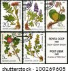 USSR - CIRCA 1985: a stamp from USSR, shows medicinal plant from Siberia, circa 1985. - stock photo