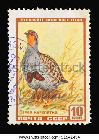 USSR - CIRCA 1968: A stamp printed in the USSR showing bird, circa 1968