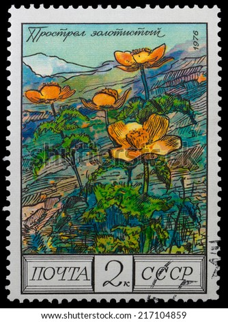 USSR - CIRCA 1976: A stamp printed in the USSR showing flowers mountainous Caucasus - buttercup, circa 1976