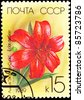 USSR - CIRCA 1989: A stamp printed in the USSR shows a Eclat du Soir Lily, circa 1989. - stock photo