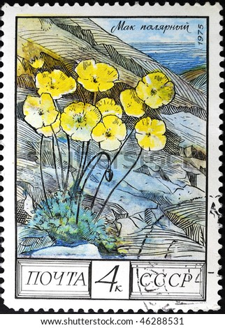 USSR - CIRCA 1975: A stamp printed in the USSR shows a Papaver dahlianum, circa 1975
