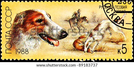 USSR- CIRCA 1988:  A stamp printed in the USSR shows a Russian Wolfhound, also known as Borzoi, killing a red fox with hunter on horseback, circa 1988.