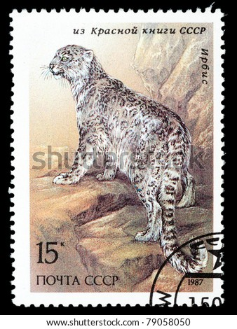 USSR - CIRCA 1987: A stamp printed in the USSR shows a Snow leopard - Uncia uncia, circa 1987