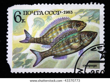 USSR - CIRCA 1983: A stamp printed in the USSR shows Spicara smaris, circa 1983