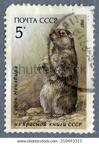 """USSR - CIRCA 1987: A Stamp printed in USSR -  a marmot from the series """"Red Data Book of USSR"""", circa 1987  - stock photo"""