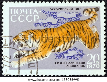 """USSR - CIRCA 1970: A stamp printed in USSR from the """"Fauna of Sikhote-Alin Nature Reserve"""" issue shows a Siberian tiger, circa 1970. - stock photo"""