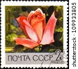 "USSR - CIRCA 1969: A stamp printed in USSR (Russia) shows red rose with the inscription ""Clear Glade (Rus. Yasnaya Polyana) from the series ""Academy of Sciences Botanical Gardens, Moscow"", circa 1969 - stock photo"