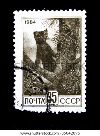USSR - CIRCA 1984: A stamp printed in USSR shows a Russian Sable circa 1984.