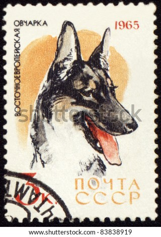 """USSR - CIRCA 1965: A stamp printed in USSR shows Alsatian dogs, series """"Dogs"""", circa 1965 - stock photo"""