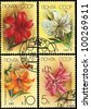 USSR - CIRCA 1989: a stamp printed in USSR shows flower lilium African Quenn, circa 1989. - stock photo
