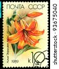 USSR - CIRCA 1989: a stamp printed in USSR shows  flower lilium African Quenn,  circa 1989 - stock photo