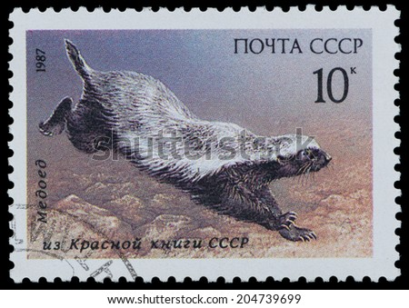 """USSR - CIRCA 1987: A Stamp printed in USSR shows image of a ratel from the series """"Endangered Wildlife"""", circa 1987 - stock photo"""