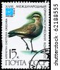 """USSR - CIRCA 1982: A Stamp printed in USSR shows image of a Sociable Lapwing with inscription """"Chettusia gregaria"""" from the series """"Rare Birds"""" devoted 18th Ornithological Cong., Moscow, circa 1982 - stock photo"""