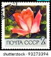 USSR - CIRCA 1969: a stamp printed in USSR shows  Rose  Yasnaya Polyana, series   Botanical Gardens of the Academy of Sciences , circa 1969 - stock photo