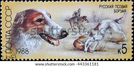USSR - CIRCA 1988: A stamp printed in USSR, shows Russian Greyhound, fox hunt, series Hunting dogs, circa 1988 - stock photo