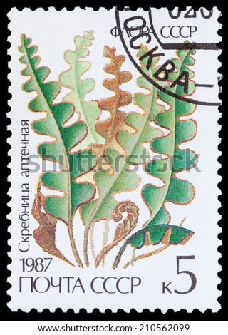 USSR - CIRCA 1987: A stamp printed in USSR shows the groomers pharmacy, circa 1987 - stock photo
