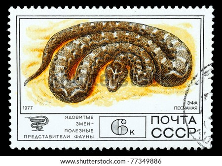 "USSR - CIRCA 1977: A Stamp printed in USSR shows the image of a Carpet Viper from the series ""Venomous snakes, useful for medicinal purposes"", circa 1977 - stock photo"