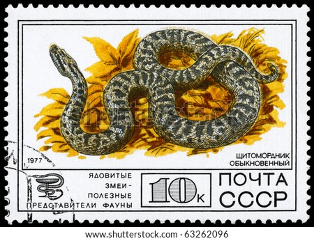 "USSR - CIRCA 1977: A Stamp printed in USSR shows the image of a Halys Viper from the series ""Venomous snakes, useful for medicinal purposes"", circa 1977 - stock photo"