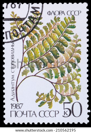 USSR - CIRCA 1987: A stamp printed in USSR shows the maidenhair stopovidny, circa 1987 - stock photo