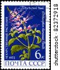 "USSR - CIRCA 1972: A Stamp printed in USSR shows the Orthosiphon stamineus, from the series ""Medicinal Plants"", circa 1972 - stock photo"