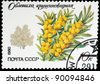 USSR - CIRCA 1980: A stamp printed in USSR shows the sea-buckthorn, circa 1980 - stock photo