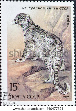 USSR - CIRCA 1987: Postage stamp of the USSR with the image of the snow leopard. A series of postage stamps Red Book of the USSR 1987. - stock photo