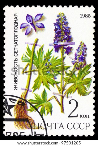 USSR - CIRCA 1985: stamp from the USSR shows image of Dictyocaryum, of the medicinal plants from Siberia series, circa 1985 - stock photo