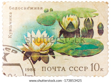 USSR - CIRCA 1984: stamp from the USSR shows image of water lilies, circa 1984 - stock photo