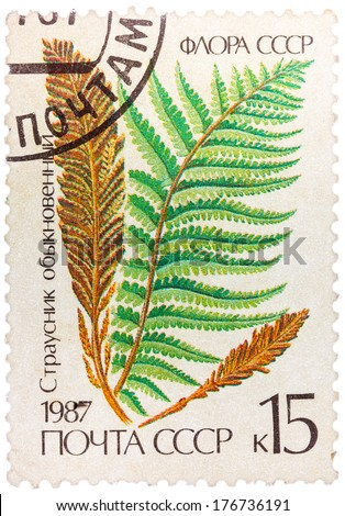USSR - CIRCA 1987: Stamp printed in the USSR shows Ostrich fern, circa 1987 - stock photo