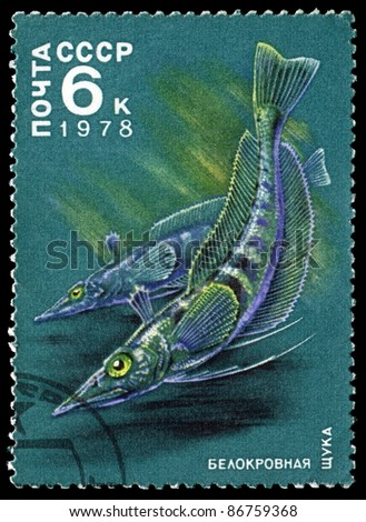 """USSR  - CIRCA 1978: The post stamp printed in the Soviet Union shows image of a Whiteblooded Pikes from the series """"Antarctic Fauna"""", circa 1978 - stock photo"""