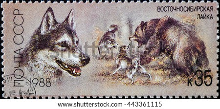 USSR - CIRCA 1988: The postal stamp printed in USSR - East Siberian Laika, series Hunting dogs, circa 1988, circa 1988 - stock photo