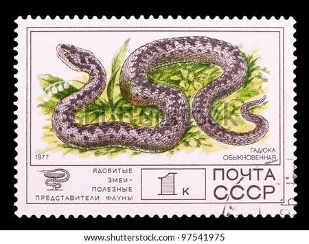 "USSR - CIRCA 1977: The postal stamp printed in USSR shows a Common European Adder from the series ""Venomous snakes, useful for medicinal purposes"", circa 1977 - stock photo"