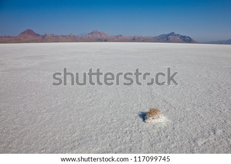 Utah Salt Flats with Small Tumble Weed in the Foreground - stock photo