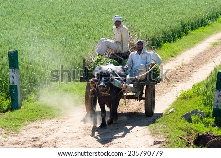 UTTAR PRADESH, INDIA- MAR 2:  locals on a cart loaded with grass on March 2, 2013, in Uttar Pradesh, India. In many parts of India, buffaloes and cows are still used to pull carts and work in farm. - stock photo