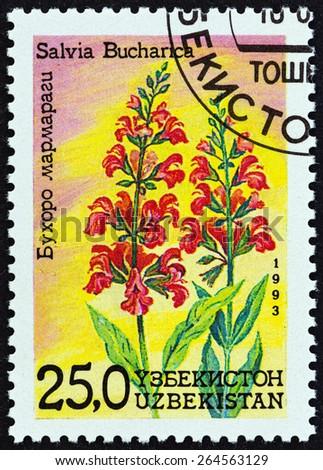 "UZBEKISTAN - CIRCA 1993: A stamp printed in Uzbekistan from the ""Flowers "" issue shows Salvia bucharica, circa 1993.  - stock photo"