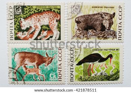 UZHGOROD, UKRAINE - CIRCA MAY, 2016: Collection of postage stamps printed in USSR shows different wild animals from Bialowieza Forest or Belovezhskaya Pushcha (Belarus), circa 1969 - stock photo