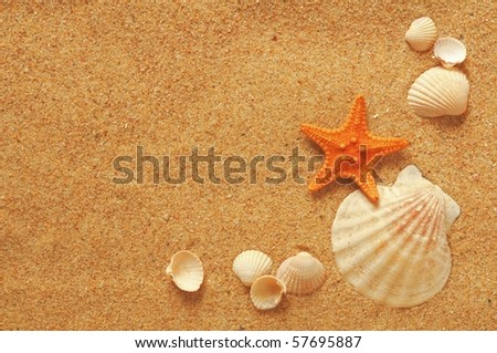 vacation memories from the beach, sea fish and shell - stock photo