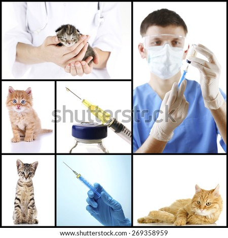 Vaccination and treatment of animals, collage - stock photo