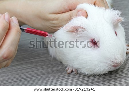 Vaccine test on laboratory mouse, applied by injection, Testing drugs and vaccine on a mouse, Laboratory animals, Animal Inoculation, guinea pig. - stock photo
