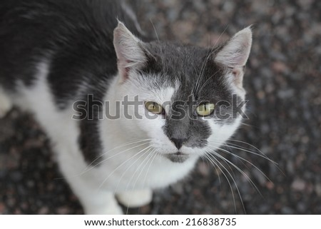 vagrant street cat looking at the camera - stock photo