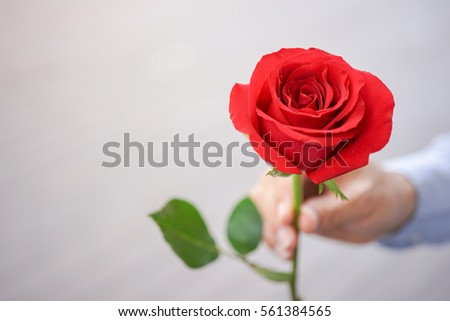 Valentine concept : A rose holding on man hand giving for wife or girlfriend, Valentine's Day Background