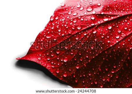 Valentine day symbol - Water Drops on Red Plant Leaf - stock photo