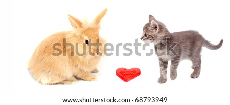 valentine heart and pussy cat and rabbit - stock photo
