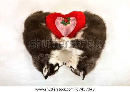 Valentine Husky puppies sleeping in heart shape with red valentine cushion