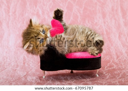 Valentine kitten on pink chair with small pink heart - stock photo