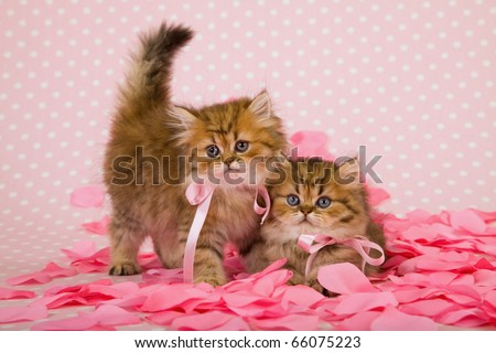 Valentine kittens with pink rose petals - stock photo